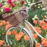 op de fiets met lowietje tussen de bollenvelden